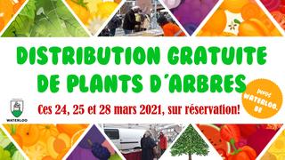 Distribution d'arbres: tous les plants sont réservés!