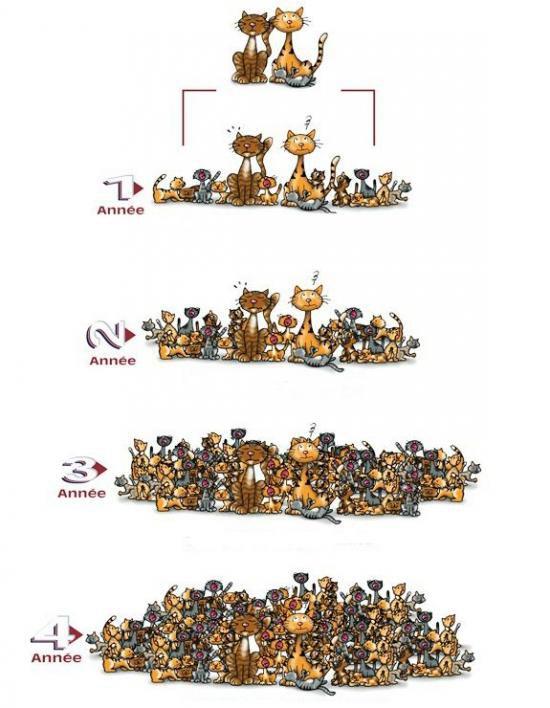 chatserrants pyramide redim 0